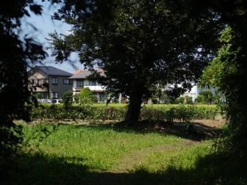 Y8150152oldtree.jpg