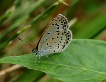 butterfly222.jpg