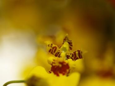 flora4.jpg