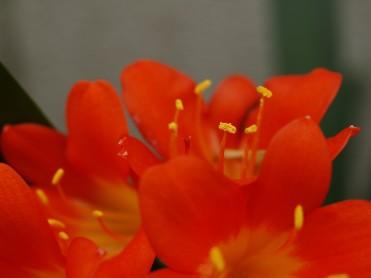 floracntr3.jpg
