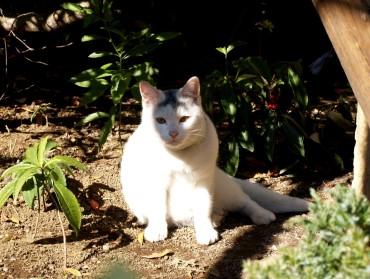 newcat1.jpg