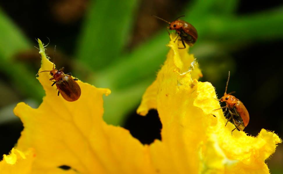 Dsc01975_13bugs